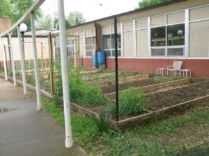 Picture of Incarnation community garden